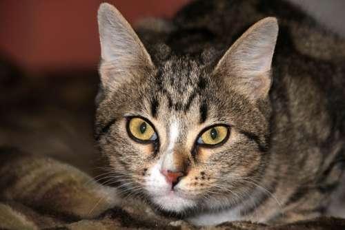 Animals Cat Closeup Kitten Striped Pets Darling