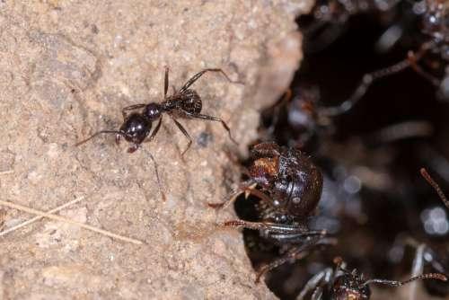 Ant Insect Macro Ants Animal Wildlife Nature Bug