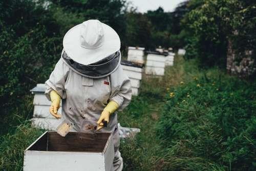 Apiary Bee Bee Farm Beehive Beeswax Garden