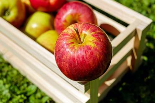 Apple Red Fruit Fruits Fresh Harvest Apple Crate