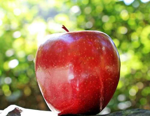 Apple Red Apple Red Chief Red Fruit Fresh