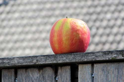 Apple Fruit Healthy Around Fence Are Color Red