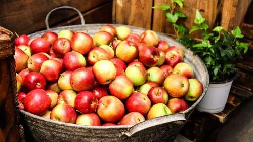 Apple Asia Fruits Asia Apple Korea Apple Fruits