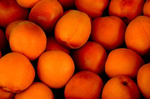 Apricot Tropical Fruit Fruit Fruits Delicious