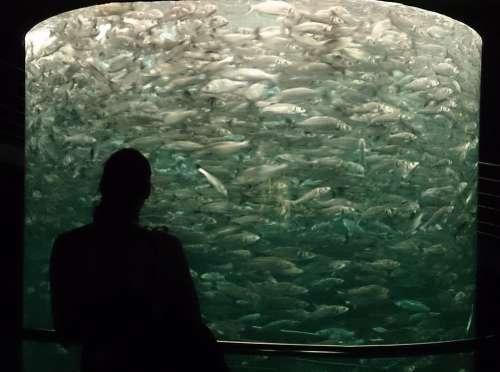 Aquarium Tenerife Fish Fish Swarm