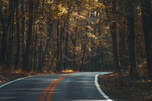 Asphalt Forest Dark Fall Guidance Highway