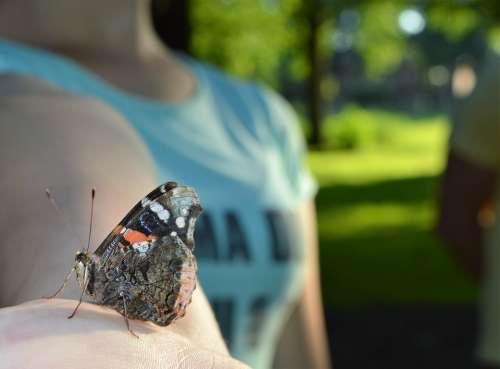 Atalanta Butterfly Bug Animal Colorful Summer