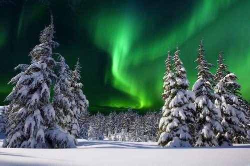 Aurore Boreale Night Snow Fir Winter Nature