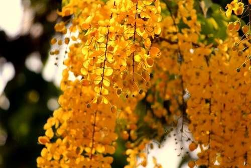 Autumn Nature Bright Blur Leaves Outdoors Foliage