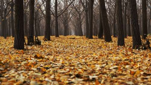Autumn Dry Leaves Fall Forest Landscape Leaves