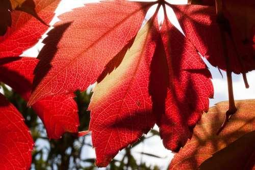 Autumn Fall Foliage Golden Autumn Leaves