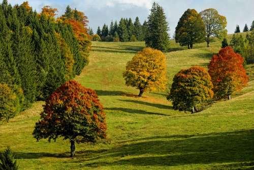 Autumn Autumn Forest Trees Fall Foliage