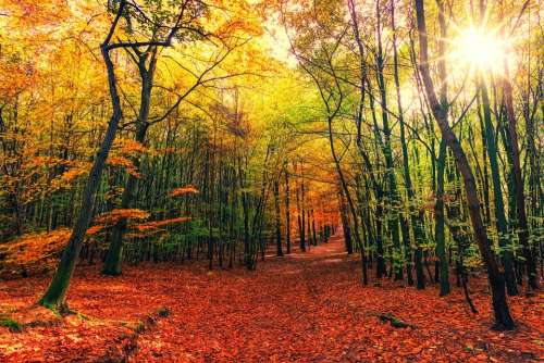 Autumn Away Leaves Colorful Sun Nature Forest
