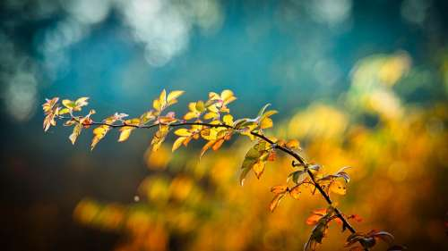 Autumn Leaves Branch Bright Autumn Mood Emerge