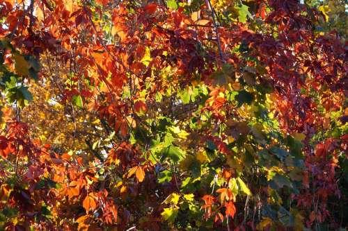 Autumn Leaves Fall Foliage Fall Color Fall Leaves