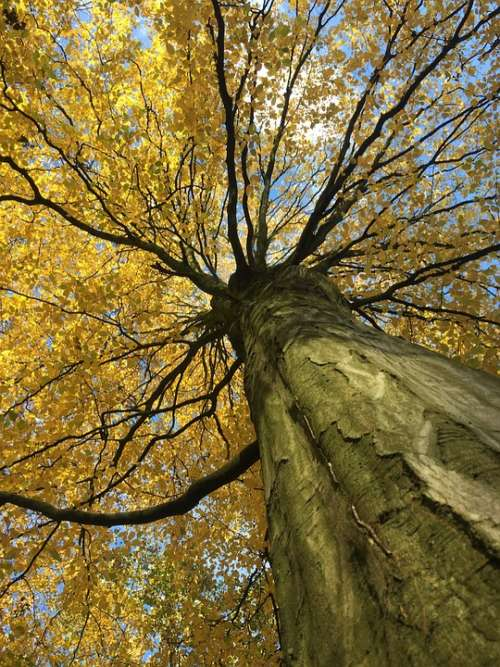 Autumn Tree Forest Landscape Nature Leaves
