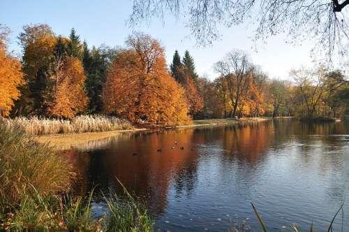 Autumn Nature Trees Landscape