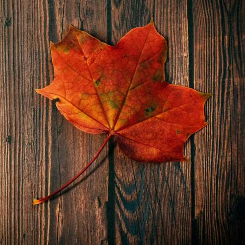 Autumn Fall Foliage Leaves Leaf Nature Plant