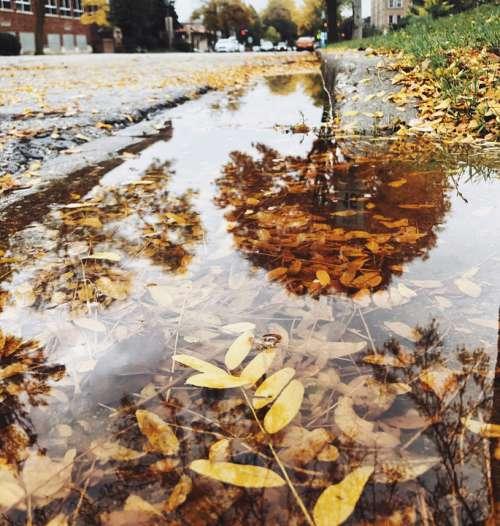 Autumn Fall Orange Puddle Leaves Rainy Day