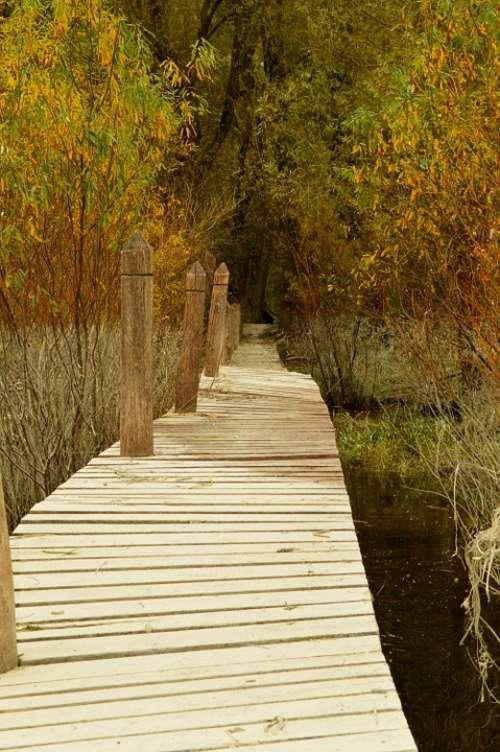 Autumn Bridge Forest Nature Stream