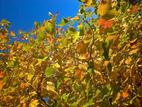 Autumn Foliage Tree Nature Orange Yellow