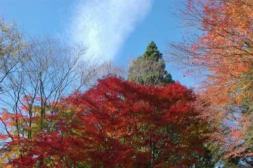 Autumn Autumnal Leaves Woods Forest Arboretum