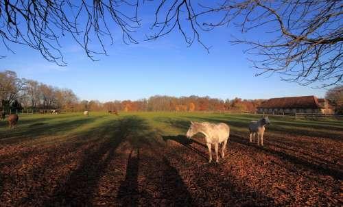 Autumn Horses Shadow Paddock Coupling Landscape