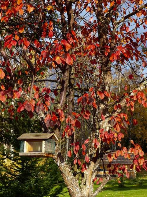 Autumn Fall Red Leaves Tree Garden Bird House