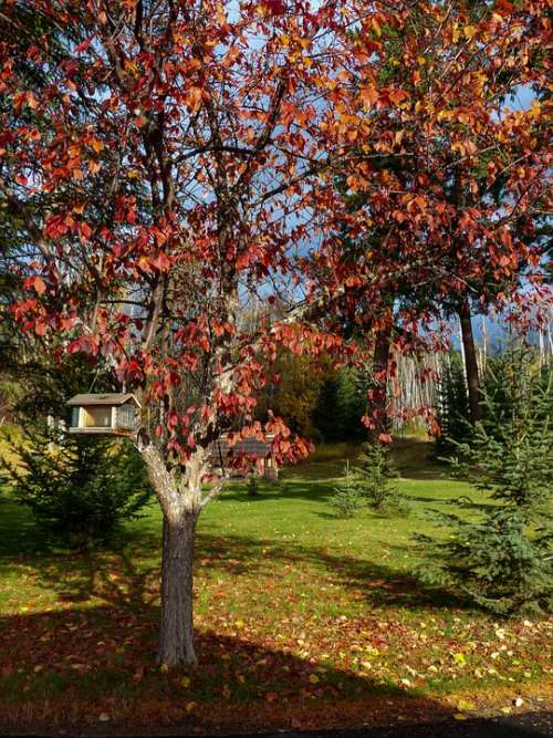 Autumn Fall Red Leaves Tree Garden Bird House