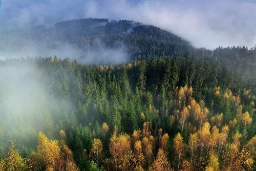 Autumn Mountains The Fog Forest Nature Landscape