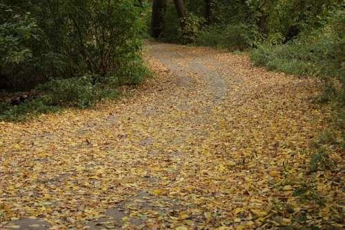Autumn Road Twist Fallen Leaves Yellow Leaves