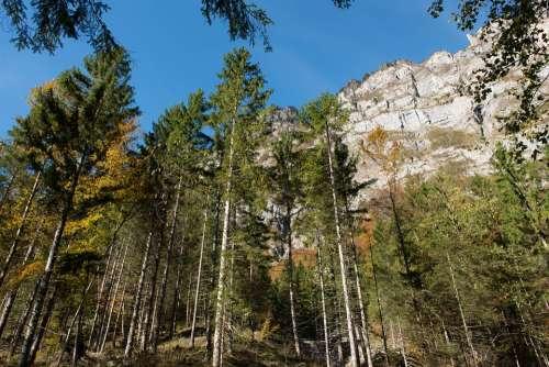 Autumn Leaves Trees Light Sun Mountain