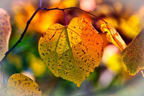 Autumn Leaves Mood Fall Color Bright Atmospheric