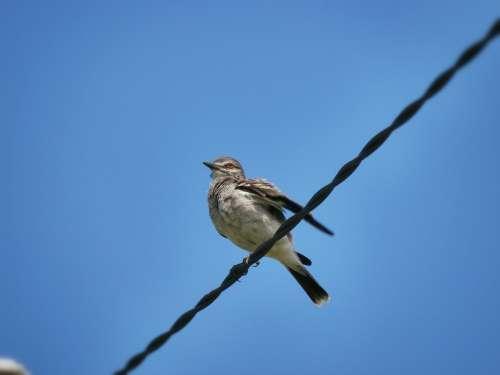 Ave Bird Centered Sky Celeste Cable Landed