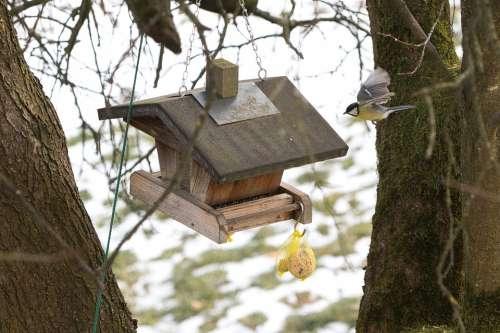 Aviary Bird Tit Bird Flight