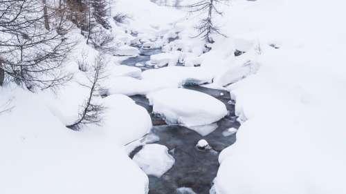 Bach Snow Forest Wilderness Land Landscape Nature