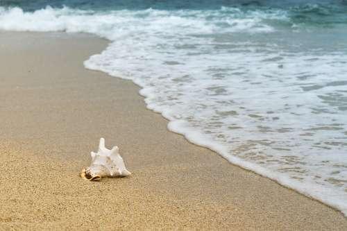 Background Shellfish Mussel Sand Wave Beach Coast