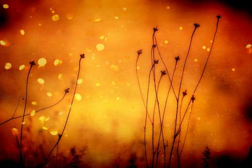 Background Plant Grasses Orange Abstract Pattern