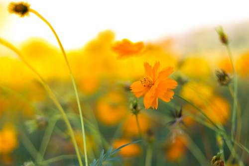 Background Flowers Nature Natural Garden Yellow