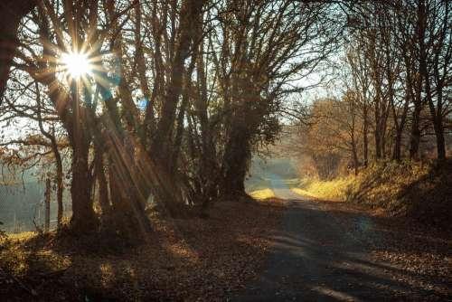 Backlight Landscape Sunrise Trees Winter