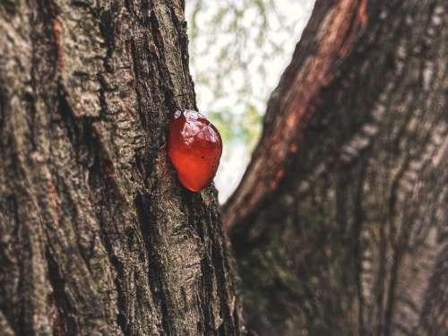 Bad Luck Tree Wood Drops Macro Strain