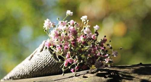 Bag Gypsofilia Seeds Gypsophila Bag