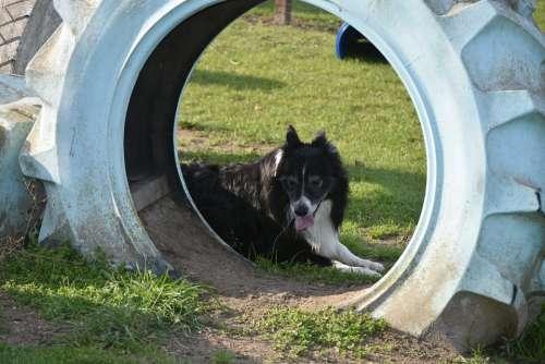Band Dog Dogs Nature Sunny Dog Training Train