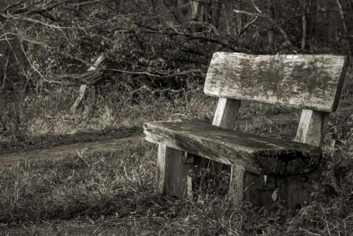 Bank Forest Bench Nature Benches Rest Silent