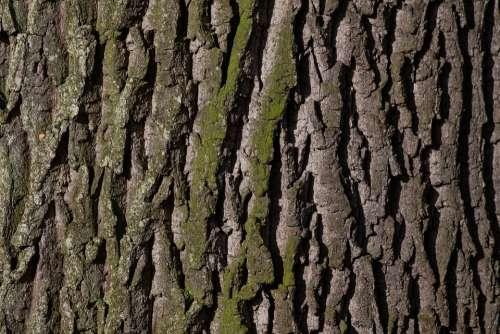 Bark Tree Oak Old Oak Bast Shed Bark Moss Green