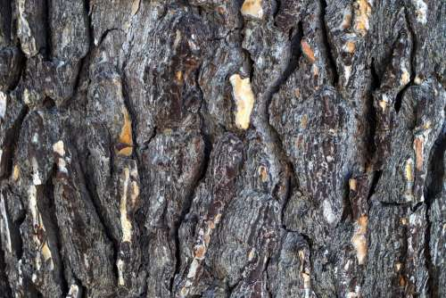 Bark Tree Wood Structure Tribe Old Log