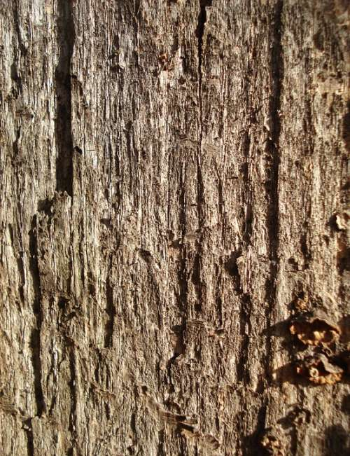 Bark Wood Background Texture Brown Pattern Wooden