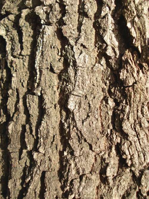 Bark Wood Background Texture Brown Pattern Wooden