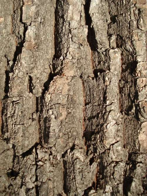 Bark Wood Texture Brown Pattern Wooden Material