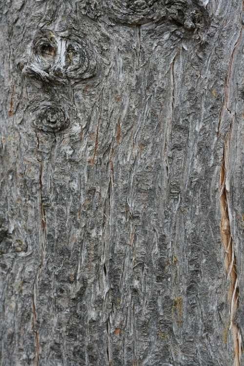 Bark Wood Tree Texture Nature Trunk Plant Trunks
